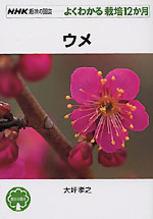 花も実もならないけど元気な梅の木
